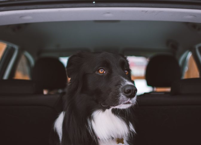 Geur van hond